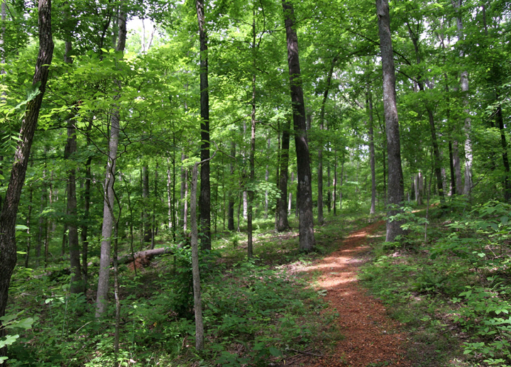 A photo of the thick, lush wooded area of the Crab Orchard Wilderness depicts a footpath running through.